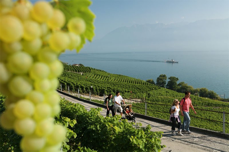 Walking through the Lavaux vines