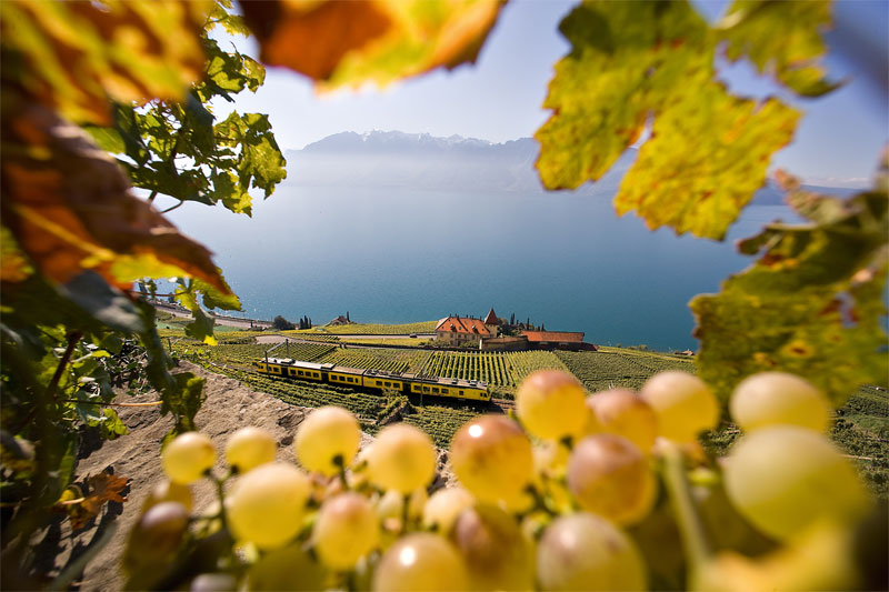 View from the terraces of Lavaux