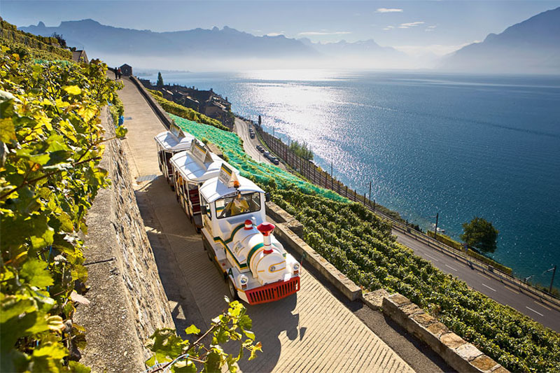 Land train through the vineyards