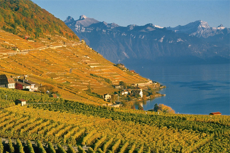 Autumn view of Lavaux
