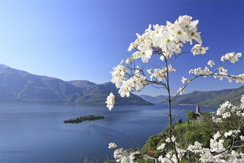 View to Brissago Islands